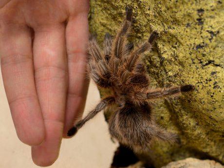 Lässt sich die Spinnenangst bald therapieren? Foto: Hanna Schwarzmeier/Uniklinikum Würzburg