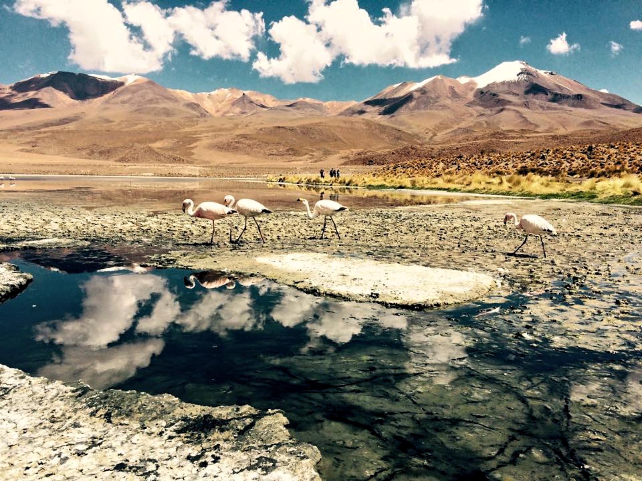 Bolivien: Laguna Capina im Nationalpark Reserva Nacional de Fauna, der meistbesuchte Nationalpark Boliviens. Foto: Maximilian Imhof