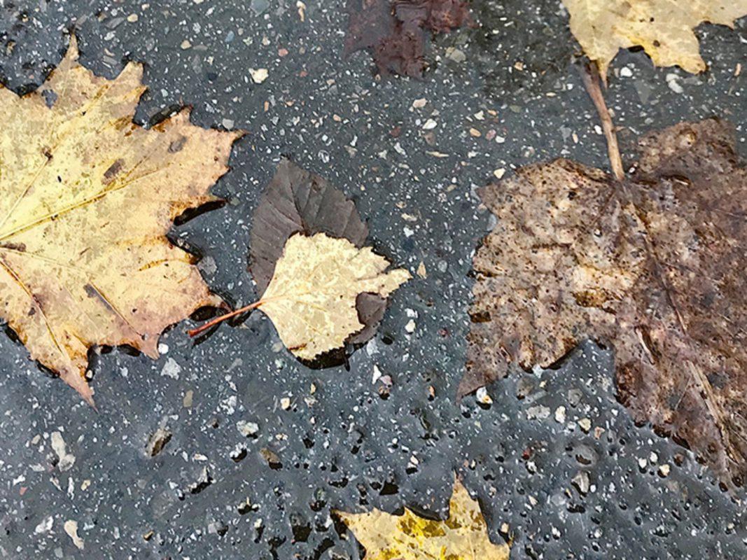 Immer wieder Regen, der November sorgte für trübe Stimmung - Foto: Hans-Martin Goede.