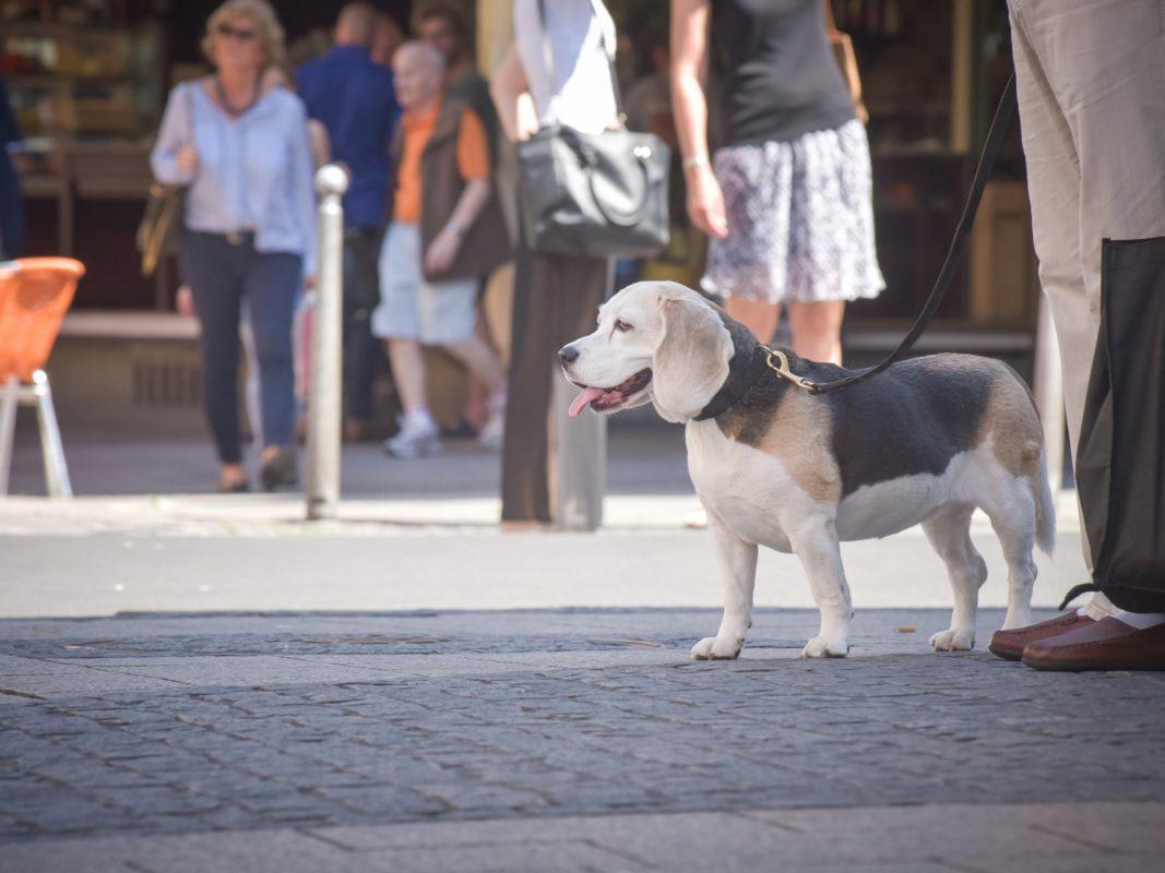 Symbolfoto Hund: Pascal Höfig