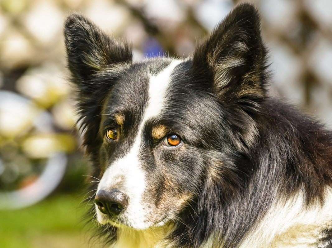 Symbolbild Hund: Pascal Höfig