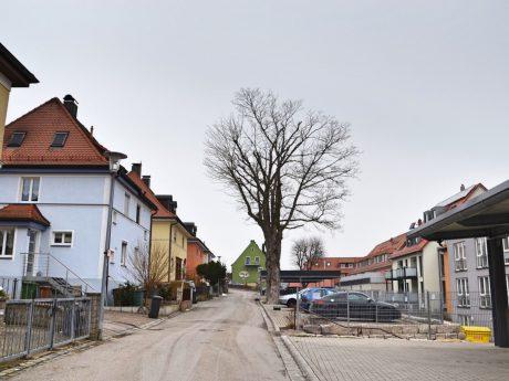 Dieser alte Baum in der Schmiedstraße wird gefällt. Foto: Eva Maria M.