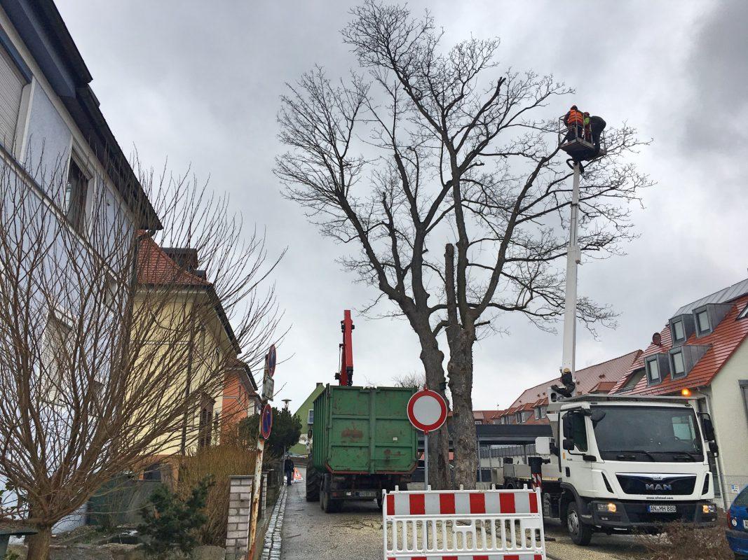 Die Fällung einer der Bäume in der Schmiedstraße läuft. Foto: Eva Maria M.