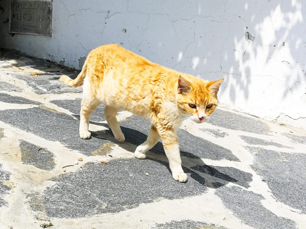 Katze auf der Straße. Symbolfoto: Pascal Höfig