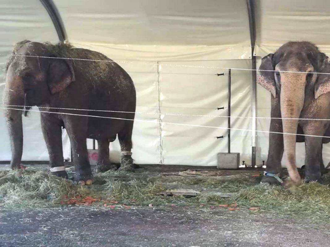 Elefantenhaltung im Circus Krone. Foto: Aktionsgruppe Tierrechte Bayern.