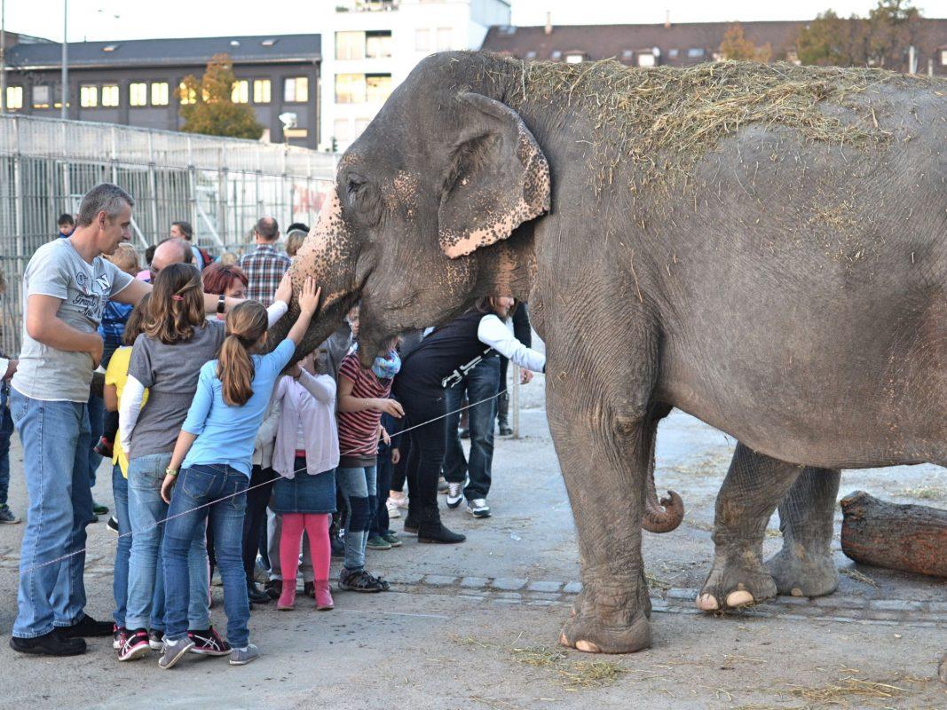 Elefant des Zirkus Charles Knie auf dem Cannstatter Wasen in Stuttgart. Foto: Dirk Candidus