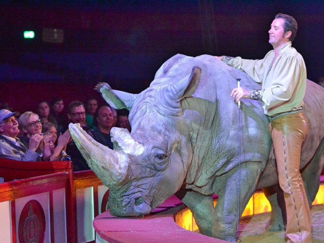 Nashornbulle Tsavo und Martin Lacey jr. im Circus Krone. Foto: Dirk Candidus