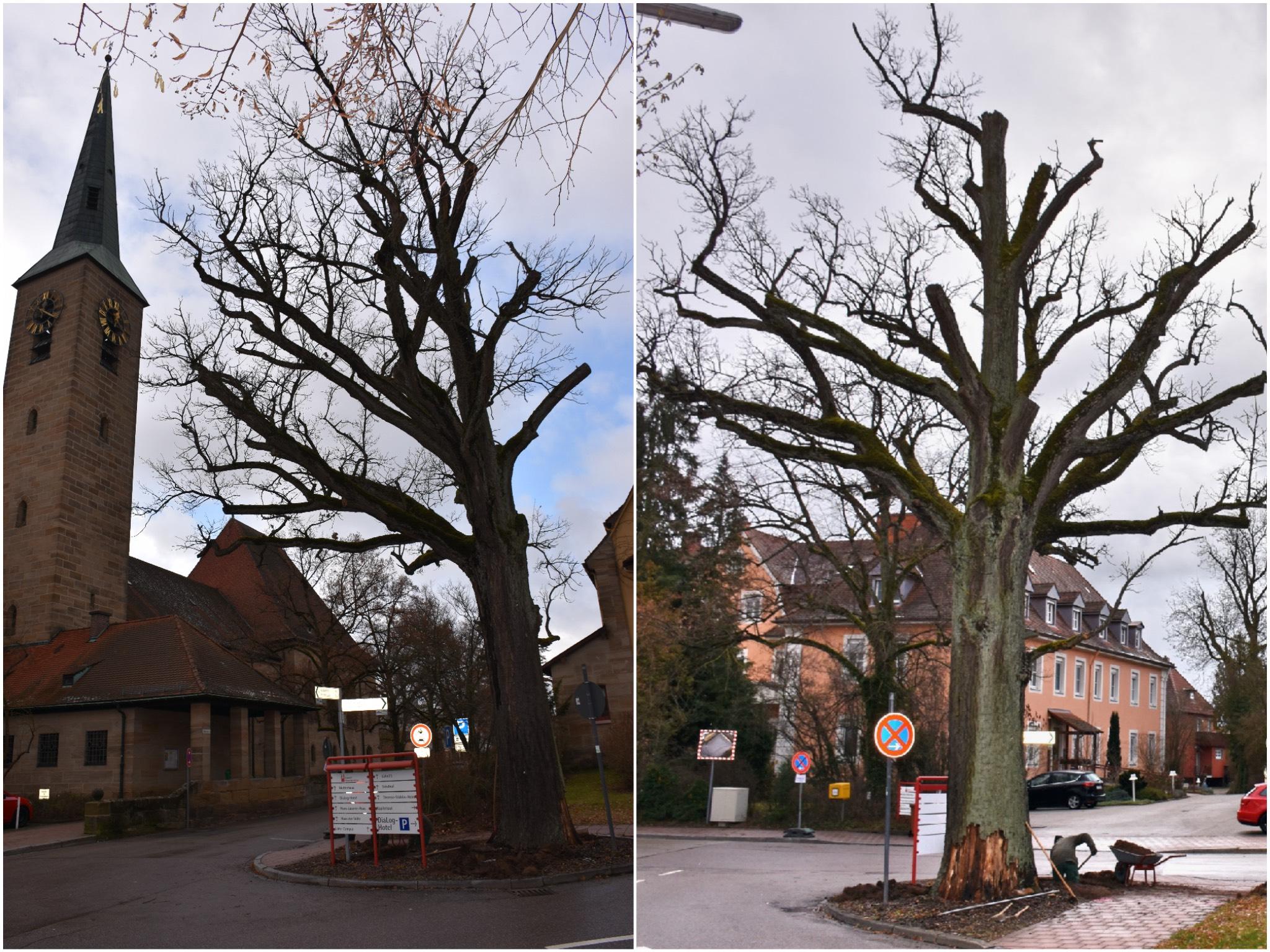 Die Friedenseiche in Neuendettelsau. Fotos: Diakonie Neuendettelsau/Thomas Schaller