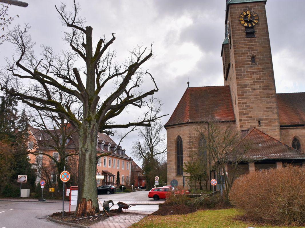 Die 248 Jahre alte Friedenseiche muss gefällt werden. Foto: Diakonie Neuendettelsau/Thomas Schaller