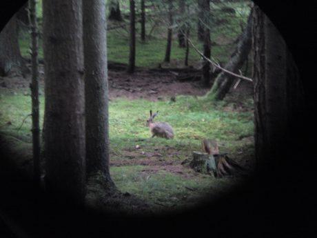 Die Jägervereinigung Ansbach warnt vor der Hasenpest im Raum Ansbach. Foto: Christian Fuhrmann