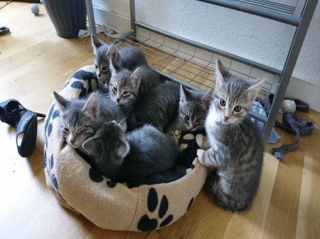 Wilde Kitten auf der Pflegestelle. Foto: Aileen Schuler