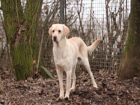 Dusty ist einer der zurzeit 17 Hunde im Tierheim Nördlingen, die auf ein neues Zuhause warten. Foto: Tierheim Nördlingen