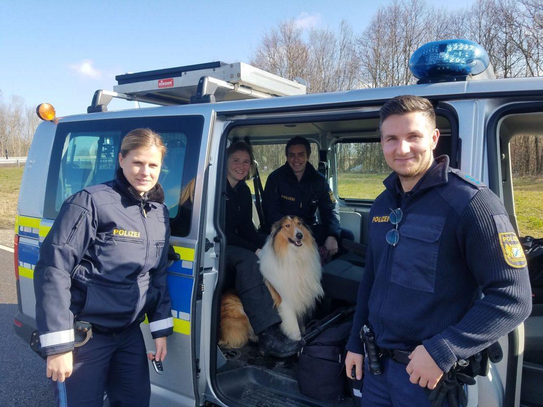 """""""Lassie"""" konnte schließlich wieder eingefangen werden. Foto: Polizei"""