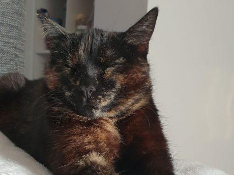 Seit Sonntag wird die Katze Hershey in Ansbach vermisst. Foto: Sezen Demirer