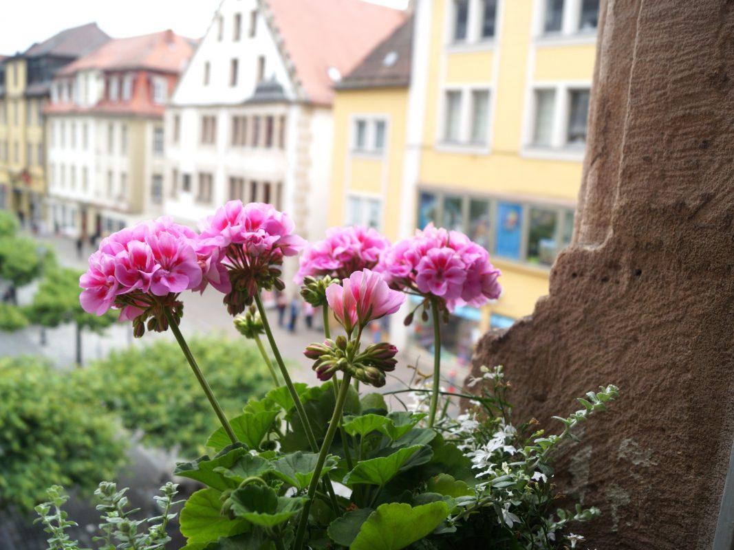 Blumen am Stadthaus. Foto: Stadt Ansbach
