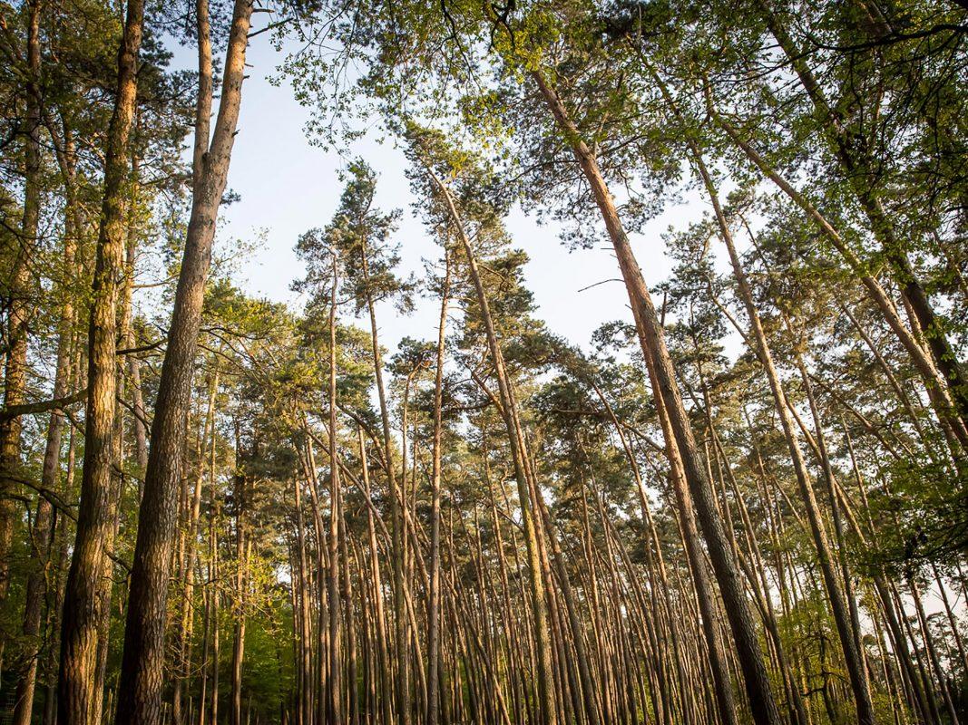 Wald. Symbolfoto: Pascal Höfig