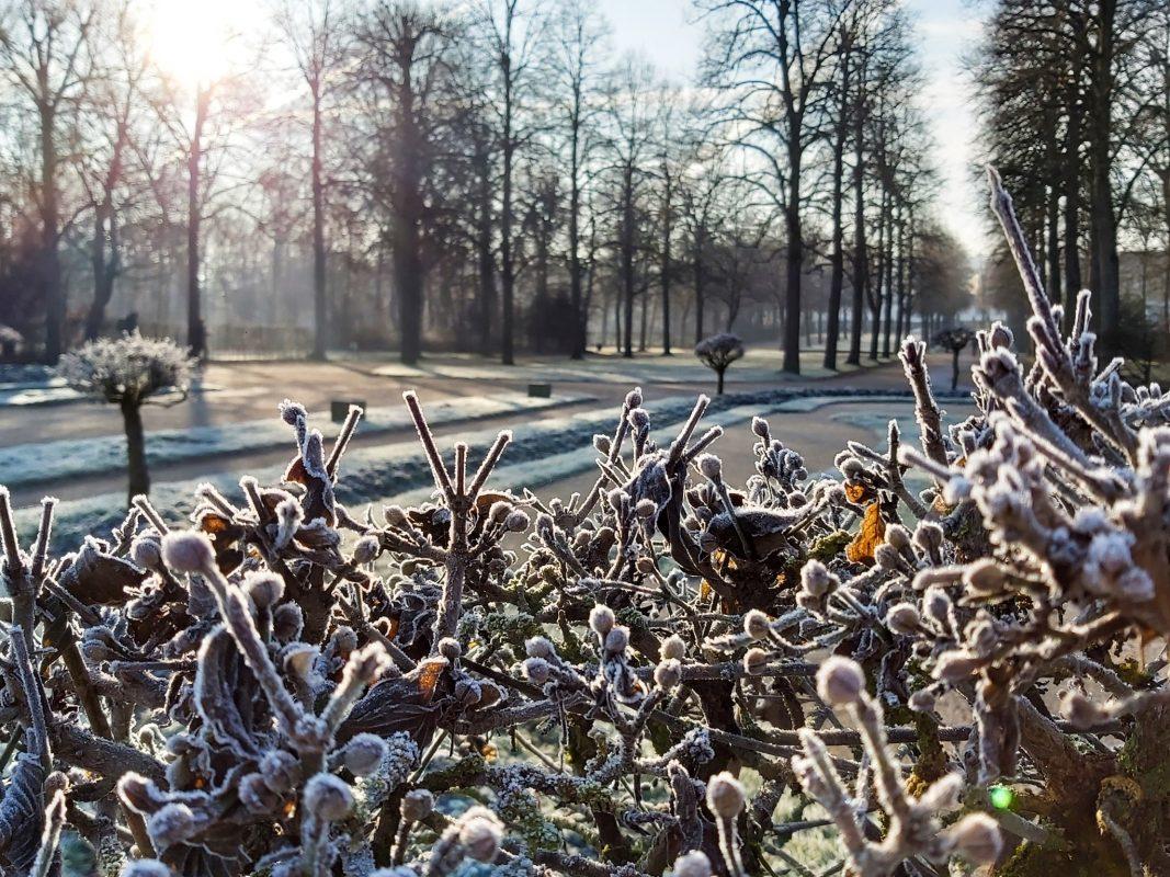 Ansbacher Hofgarten im Winter. Foto: Bettina Bocskai