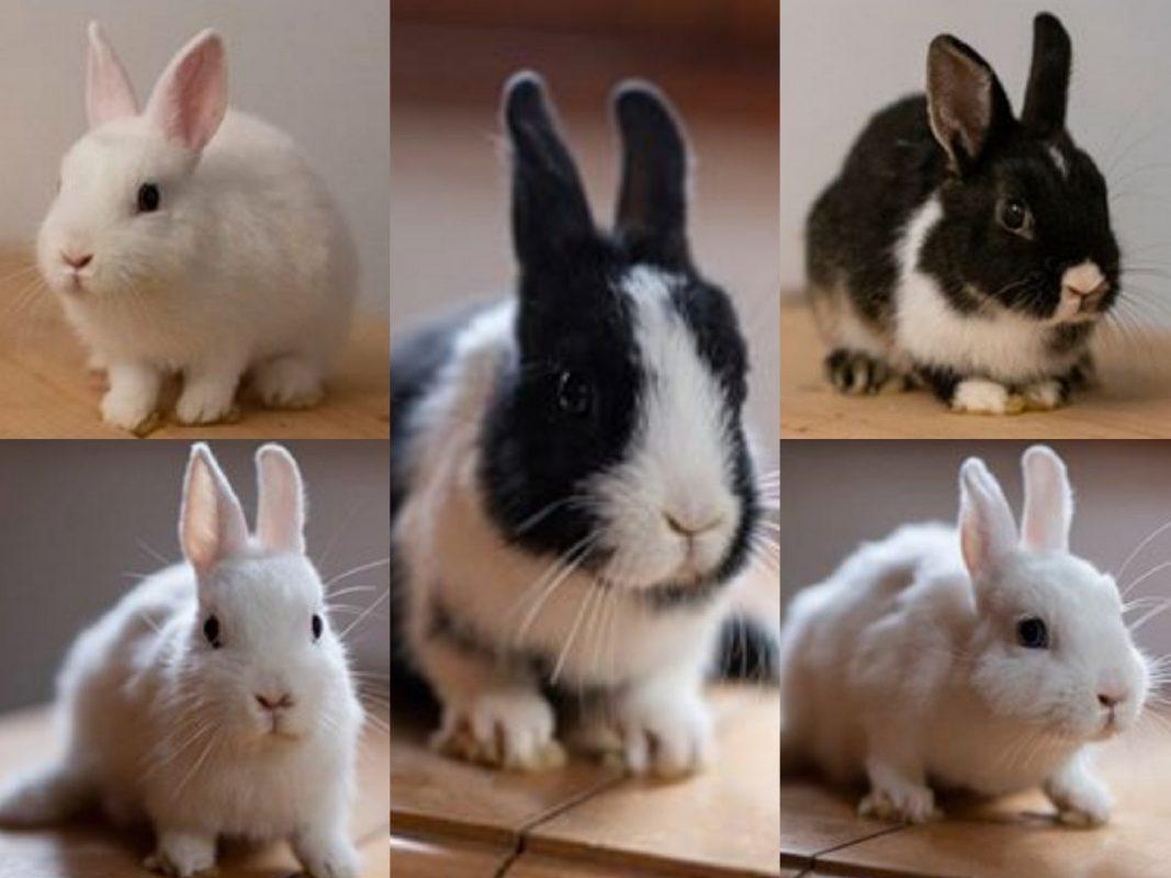 Kaninchen in Not - Tierverein Ansbach braucht Unterstützung. Foto: Aileen Schuler