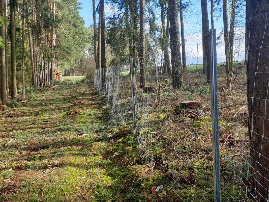 TPP schützt junge Bäume vor Wildverbiss. Foto: Stefan Klingner