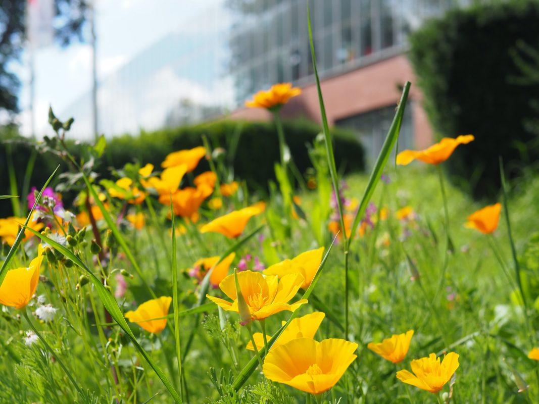 Bienenfreundliche Wiesen umringen nun das Brücken-Center Ansbach. Foto: Brücken-Center Ansbach GmbH