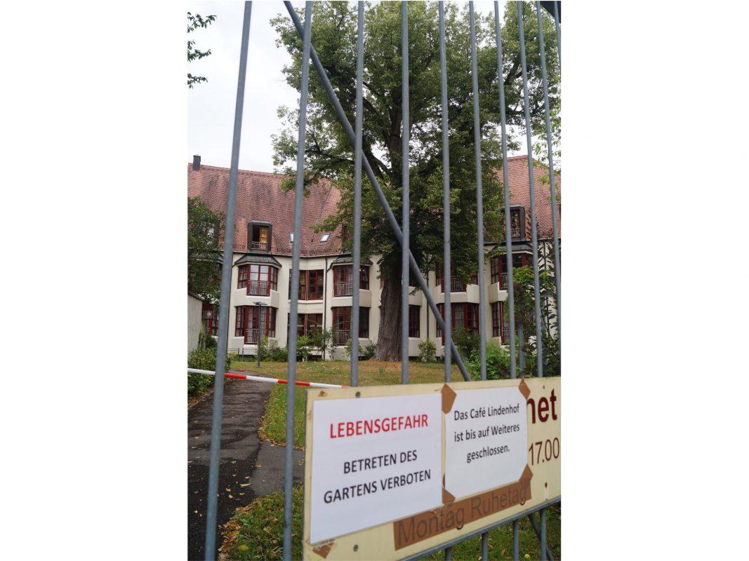 Die Winterlinde im Innenhof des Seniorenzentrums Hospital. Foto: Stadt Ansbach