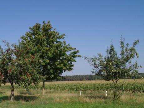 Der Landkreis Ansbach stellt die mit einem gelben Band gekennzeichneten Obstbäume zum Ernten zur Verfügung. Foto: Landkreis Ansbach