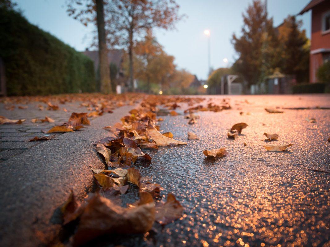 Symbolfoto Herbstlaub. Foto: Pascal Höfig