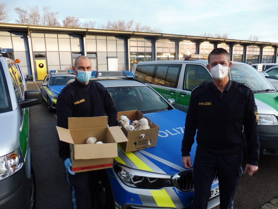 In der Nacht zum Freitag wurden im Rahmen einer Schleierfahndung junge Hundewelpen sichergestellt. Die Polizei übergab sie dem Veterinäramt Ansbach. Foto: Polizei