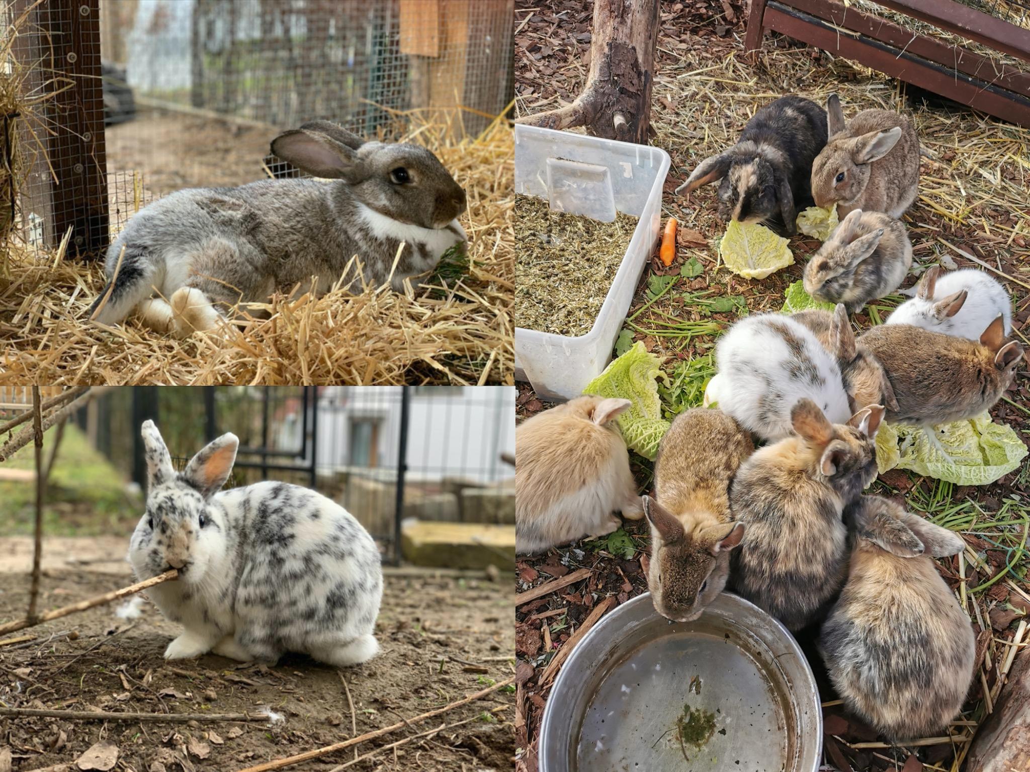 Derzeit suchen viele Kaninchen ein neues Zuhause. Foto: Gemeinsam stark für Tiere e.V.