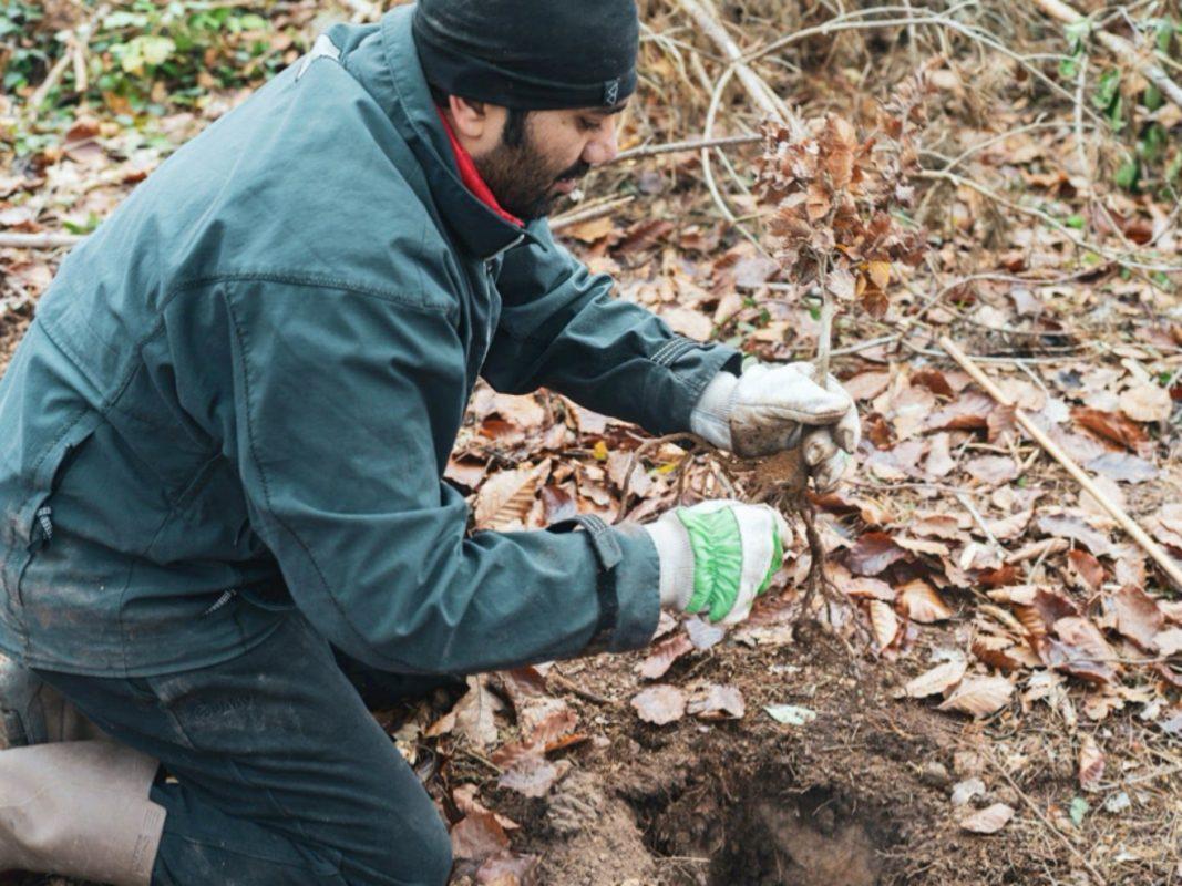 TPP-Helfer Sujay Kher pflanzt eine junge Buche. Foto: TreePlantingProjects