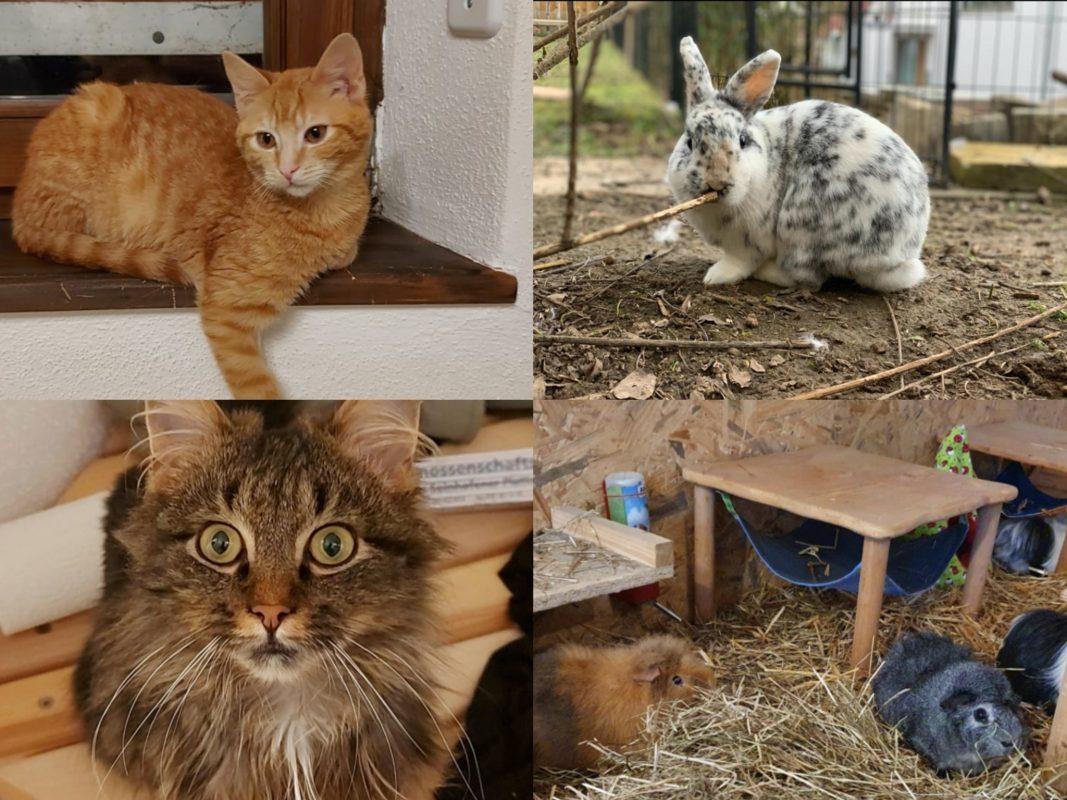 """Wie geht es dem Tierschutzverein """"Gemeinsam stark für Tier e.V."""" in der Pandemie? Foto: Gemeinsam stark für Tiere e.V."""