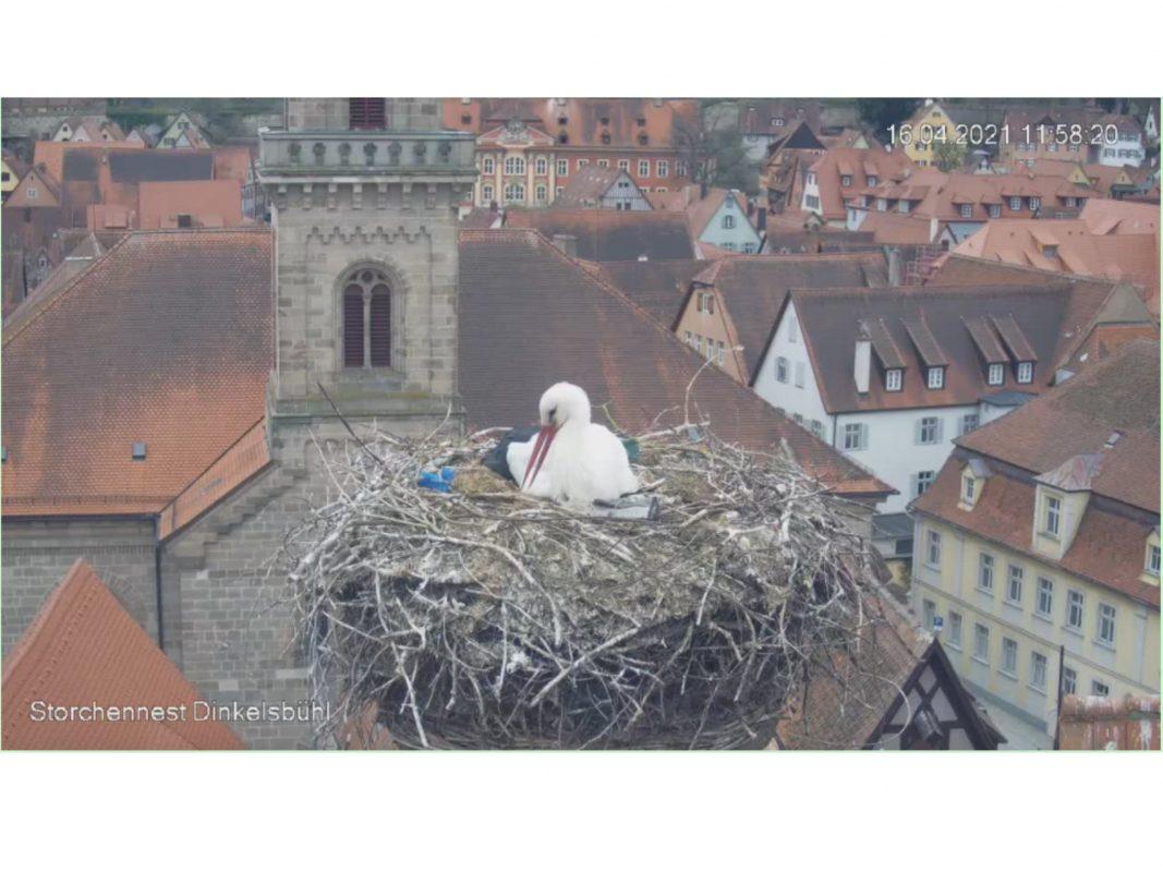 Über die Storchenkamera in Dinkelsbühl hautnah dabei. Screenshot: http://www.storch.bn-ansbach.de/