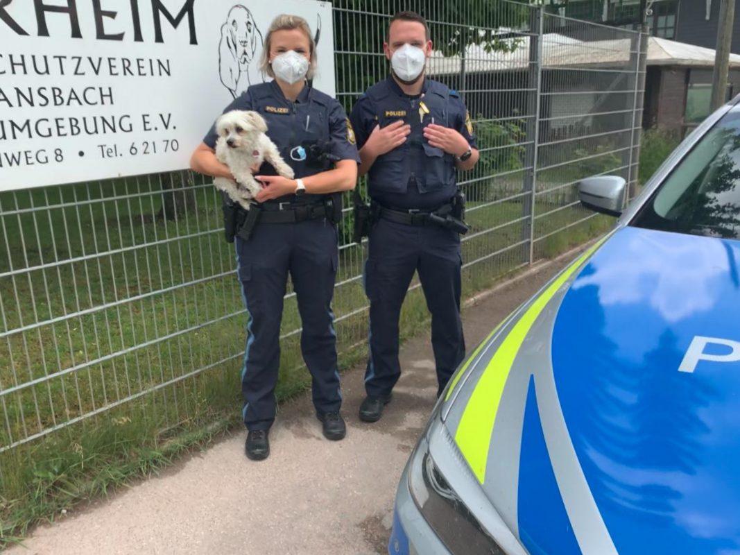 Ein Passant machte am Montag eine Polizeistreife auf einen Fundhund aufmerksam. Foto: Polizei